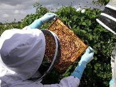 What legal powers do APHA Bee Inspectors have?