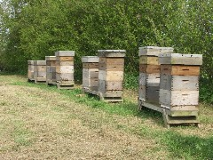 Apiaries – Places Where Bees are Kept