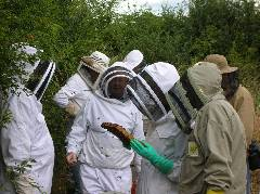 Training in Beekeeping