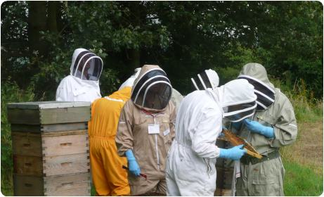 Training beekeepers